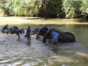 Phoe Kyar Elephant Camp Tour 2